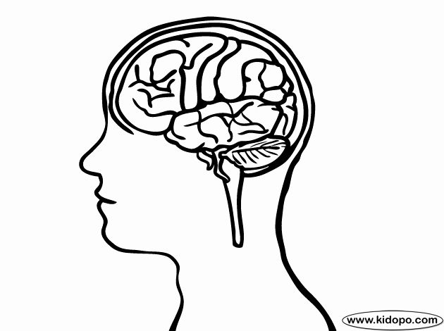 Brain Structures Coloring Sheet Human Brain Brain Structure Anatomy Coloring Book