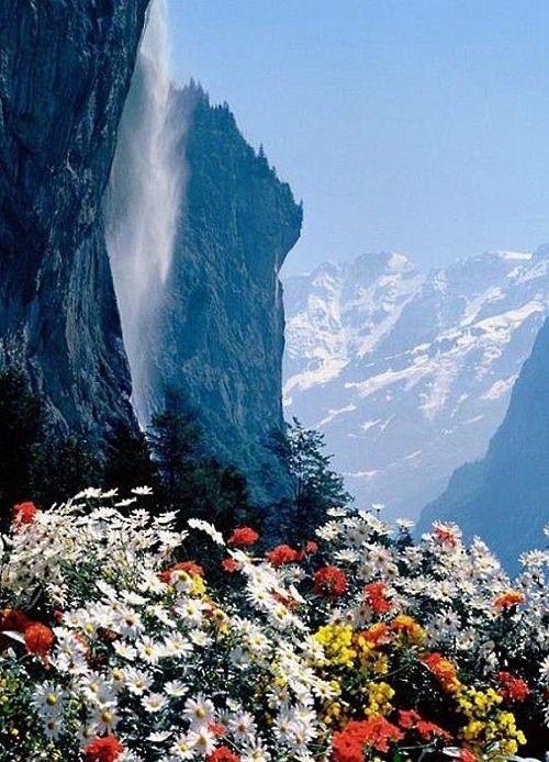 Estas flores surgen  en un epoca determinada del año  entre mayo y finales julio  en las montañas de El  Cairo.