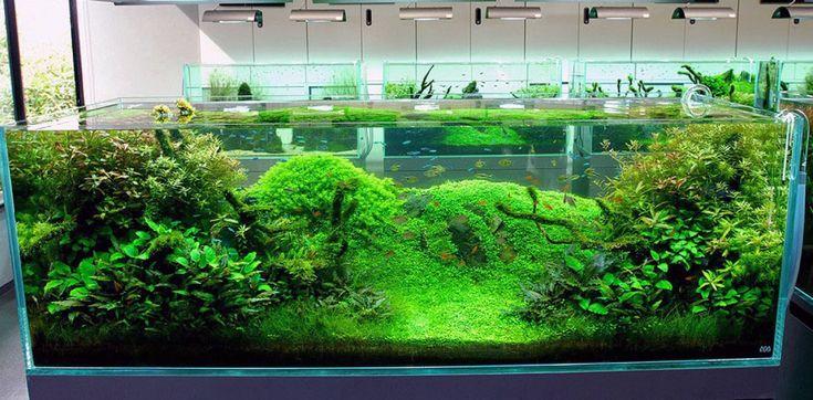 cool fish tank decoration ideas outstanding nature aquarium design