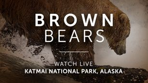 Bison Water Hole - Grasslands National Park - Live Cams - explore
