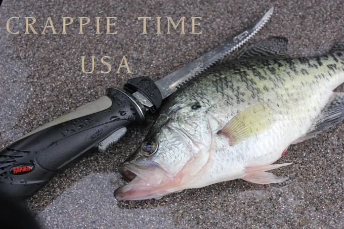 154 best crappie images on pinterest for Crappie fishing secrets