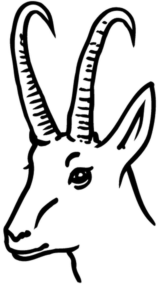 Chamois coloriages images animaux sur terre pinterest - Gazelle dessin ...