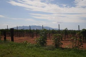 Worth the Trip: Elgin wine fest and Prescott rodeo - http://starzentertainment.net/east-valley-events/worth-the-trip-elgin-wine-fest-and-prescott-rodeo.html/