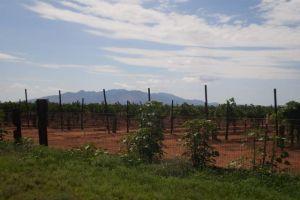 Worth the Trip: Elgin wine fest and Prescott rodeo - http://starzentertainment.net/east-valley-events/worth-the-trip-elgin-wine-fest-and-prescott-rodeo.html/
