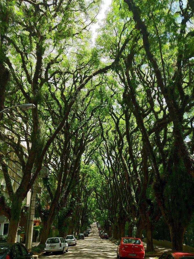 Улица в городе Порту-Алегри, Бразилия  В бразильском городе Порту-Алегри находится улица, которая достойна титула одной из самых красивых авеню в мире. Высокие ряды раскидистых типуан по обе стороны дороги создают зеленый сводчатый коридор, который похож на мифический лес.