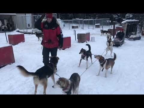 A Trip To The Post Office Sp Kennel Iditarod Musher Dog Runs