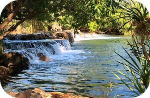Mataranka Hot Springs, Northern Territory, Australia. One of my favorite places to relax!