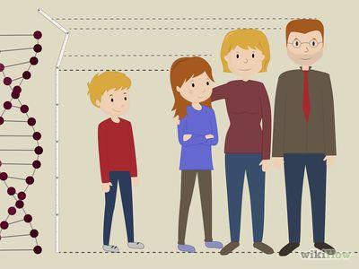 Hoe kan je Langer worden als je in de groei bent -- via wikiHow.com