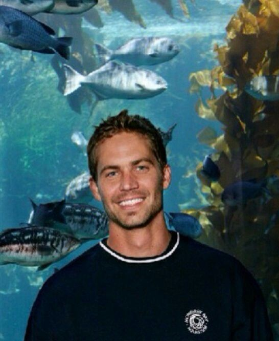 Paul Walker at the Monterey Bay Aquarium, he studied Marine Biology before becoming an actor. Such a tragic loss!