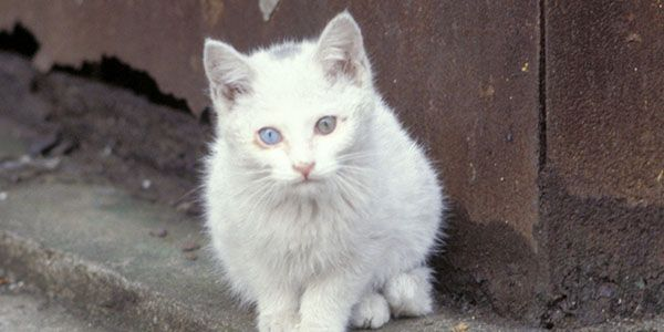 Help stop 2 million domestic cats from being killed