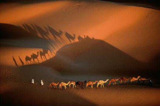 Dromadary caravan near Nouakchott, Mauritania.