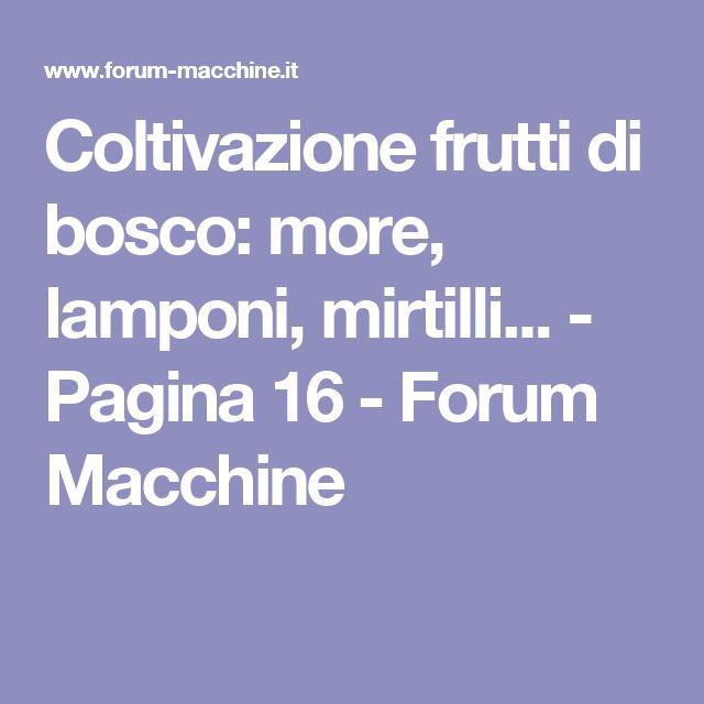 Coltivazione frutti di bosco: more, lamponi, mirtilli... - Pagina 16 - Forum Macchine