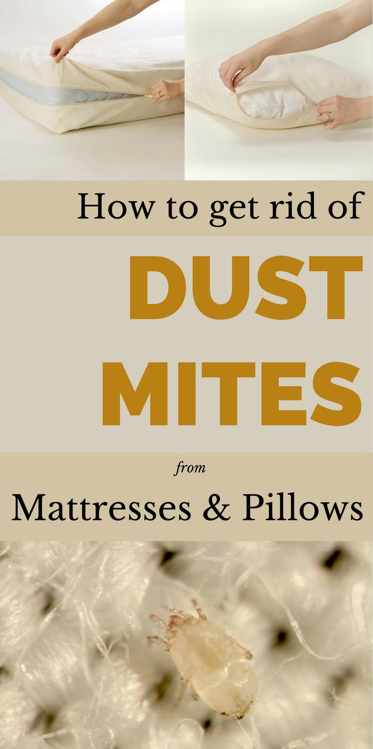 How To Get Rid Of Dust Mites In Bed 28 Images How To