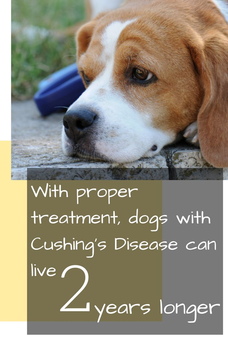 Natural Medication For Cushing S Disease In Dogs