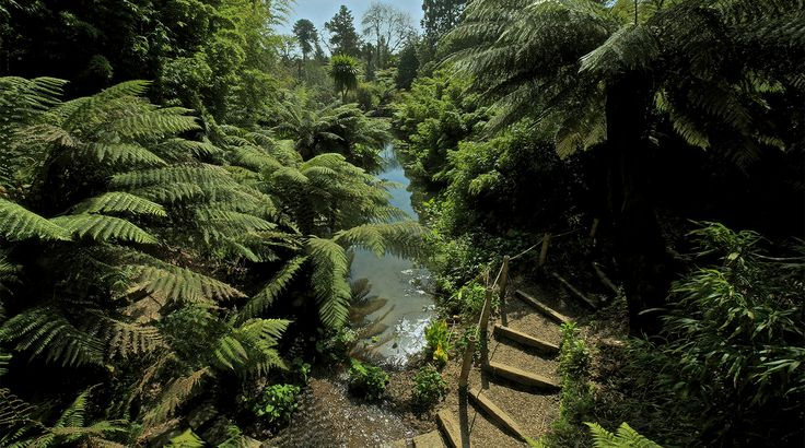 Jungle | The Lost Gardens of Heligan