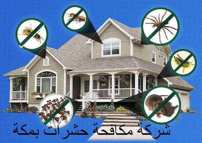 شركة مكافحة حشرات بمكةشركة مكافحة حشرات بمكة شركة مكافحة حشرات بمكة الحشرات المنزلية من أكثر المشكلات التي تواجهه العد House Styles Mansions Places To Visit