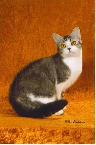 Pictures of American Wirehair Cat Breed