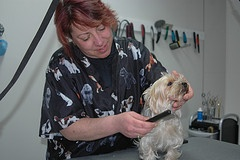 Know the importance of Dog Grooming
