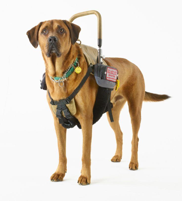Akc Service Dog Vest