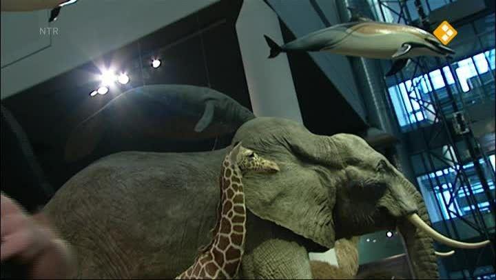Schooltv: Het Klokhuis - Prehistorische dieren