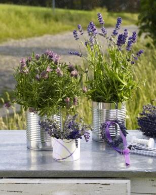 Dosen mit Lavendel