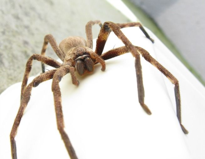 Here are 10 of the scariest spiders on the African continent, ranging from their ghastly looks to their potentially lethal level of poison.   Page 11