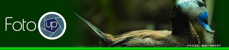 Naturalmente foto  La seconda tappa del Nature Photography Workout si terrà sabato 13 giugno presso il Parco faunistico La Torbiera di Agrate Conturbia (NO), uno dei più importanti centri italiani per la riproduzione e la conservazione delle specie animali minacciate di estinzione.