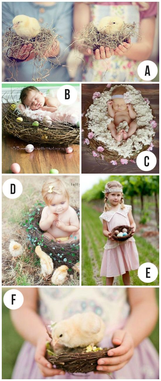 Spring Photography- nest as a photo prop.  Maybe for our Easter session.