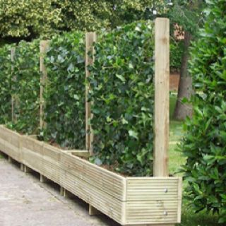 Creative,beautiful, living privacy fence.... i need this :) i hate staring at rickity wooden boring privacy fences here in town...this is fun!