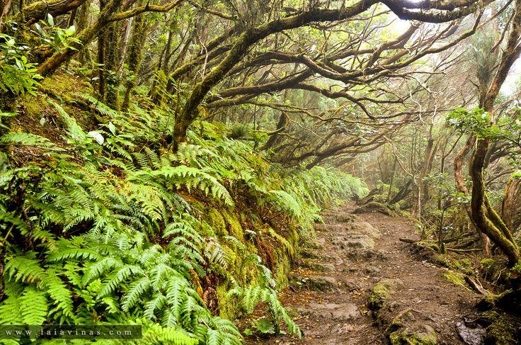 Nos adentramos en el bosque encantado de Anaga, espacio protegido de la costa noreste de la isla de Tenerife.