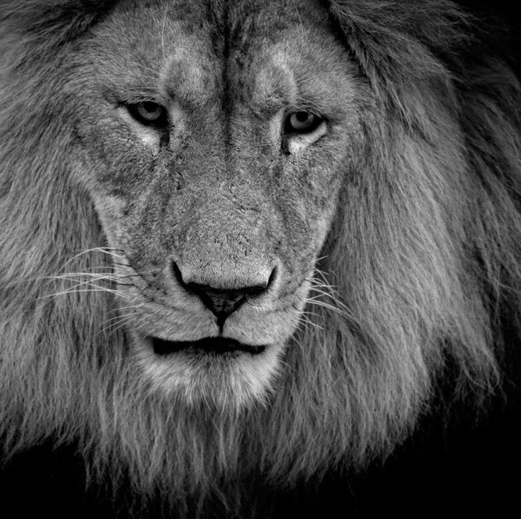 LION by Antje Braun on 500px