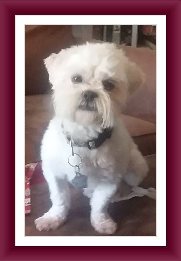 Adopt Adopted!! Bentley OH on Paws rescue, Pet