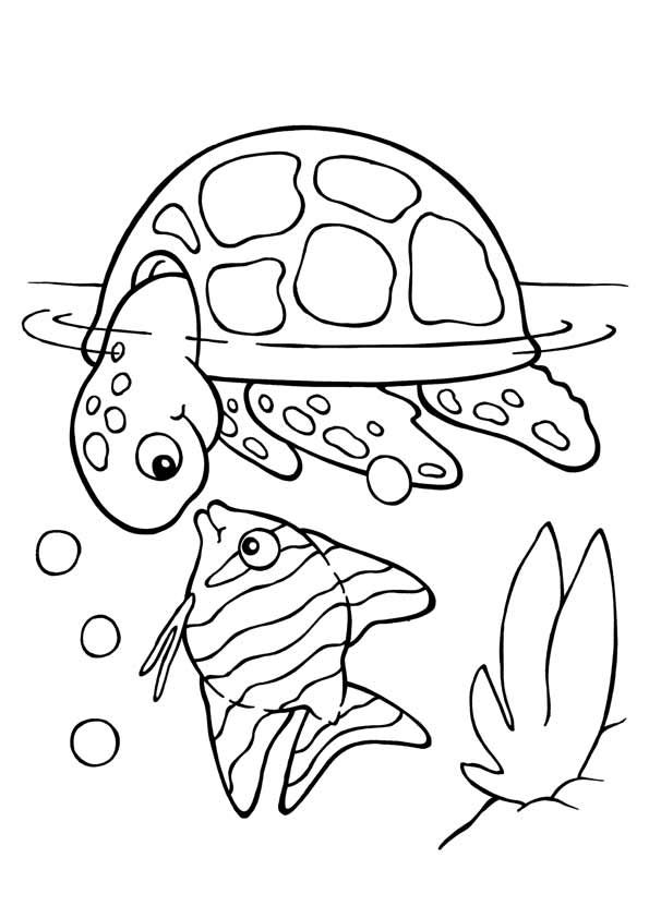Free printable turtle coloring pages for kids picture 4 printable turtles animal coloring pages kids for free