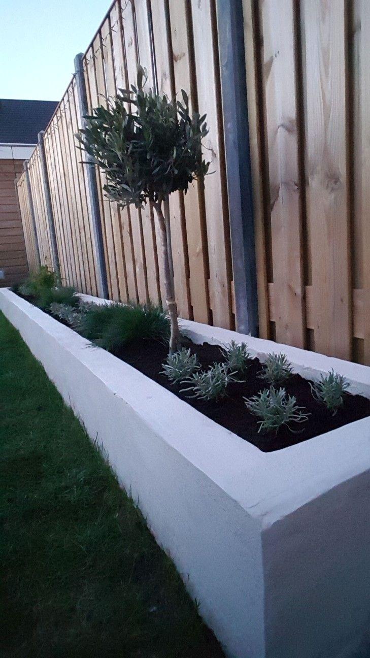 De zelf gemetselde en gestucte border, nu ook gevuld met grond(750 liter) en planten. Lavendel, siergras, bamboe en een olijfboom.