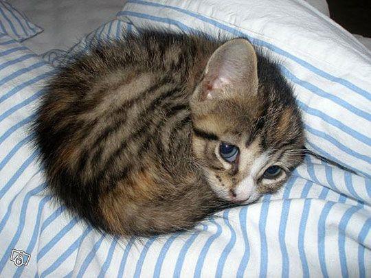 Can I Pleeeeease Sleep Here Tonight?