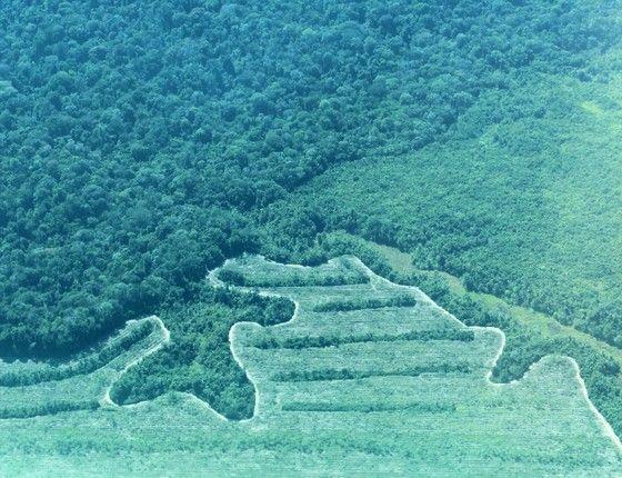 Maiores vítimas do desmatamento da Amazônia são as espécies raras