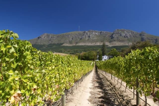 Best of the Western Cape