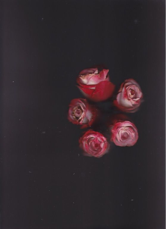 Another piece of the scanning-roses series. Images are my own.
