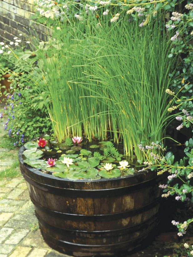 """If space is limited, a small fountain, bubbling millstone or half-barrel or trough filled with water and aquatic plants can be a good option. Place your feature by a seat or close to the house where it will be visible from the window. When planting a miniature pool, take care to avoid vigorous plants and rely on small, compact plants like pygmy waterlilies."""