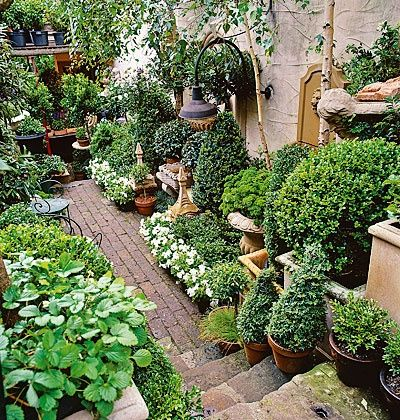 containers, boxwood, brick, strawberries