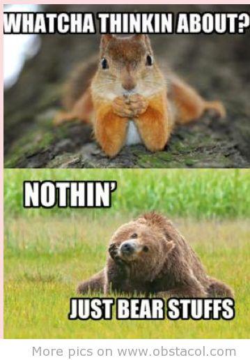Funny Animals Talking Animals Pinterest
