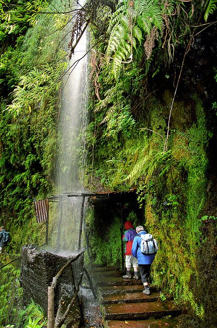 Levada walking on Madeira Island, Portugal