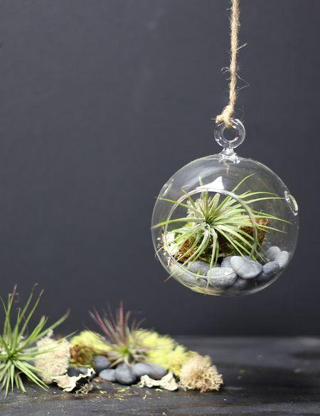 Air Plant Terrarium Kit Houseplants Hanging Air Plants Air