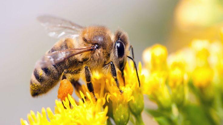 Náš venkov Tisícileté včely Dokument o včelách CZ HD