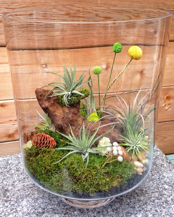 11 best cool stuff images on pinterest cool things for Cool low maintenance plants