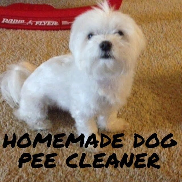 Dog Smell Clean Up: Best 25+ Dog Pee Ideas On Pinterest