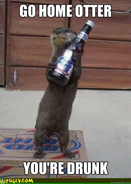 otter meme drunk - Google Search