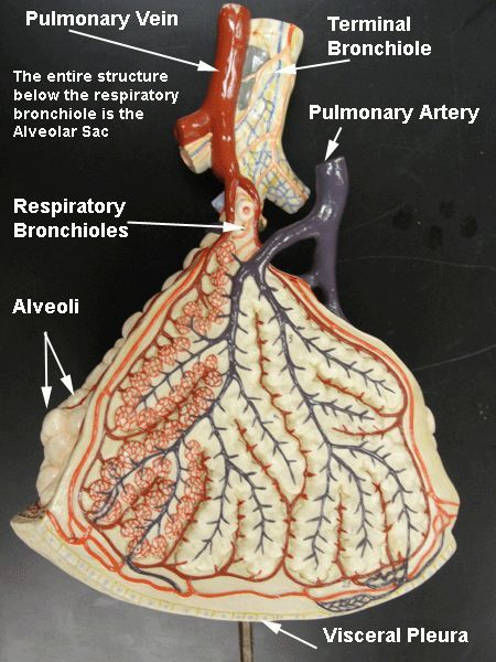 34 Best Anatomy And Physiology 2 Study Images On Pinterest