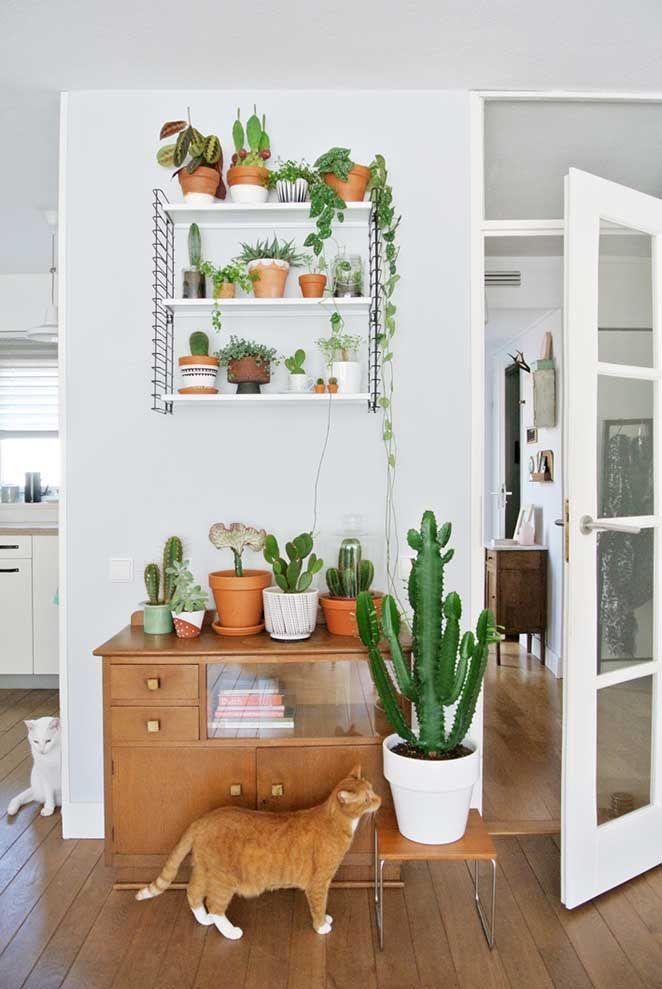 Descubra quais plantas você deve ter em um apartamento ou casa quando tem um bichinho de estimação!