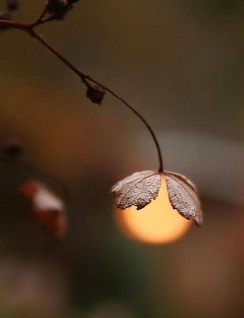 Herbstblättchen                                                                                                                                                                                 Mehr